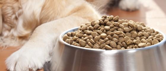 el pienso hipoalergénico es la solución para alimentar a perros con problemas de alergias